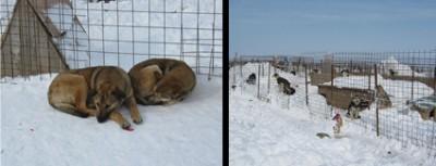 dog_shelter2