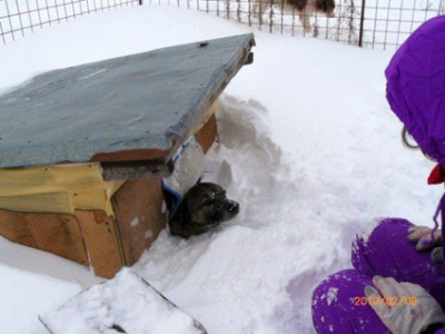 dog_shelter3