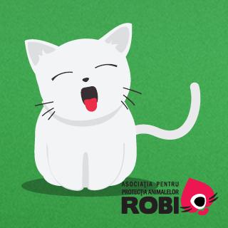 Pisicile Asociatiei Robi