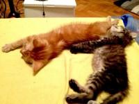 cele-2-pisicute