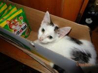 pisica cu mancarea