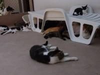 pisici curte