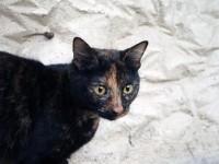 pisica gasita
