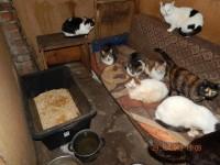 pisicile 18