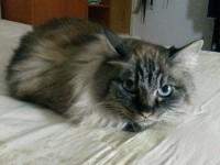 pisica abandonata