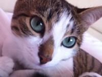 pierduta pisica